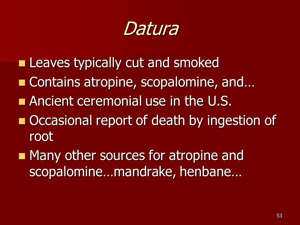 53 Datura Leaves typically cut and smoked Leaves typically cut and smoked Contains atropine, scopalomine, and… Contains atropine, scopalomine, and… Ancient ceremonial use in the U.S.