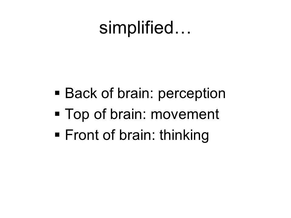 simplified…  Back of brain: perception  Top of brain: movement  Front of brain: thinking