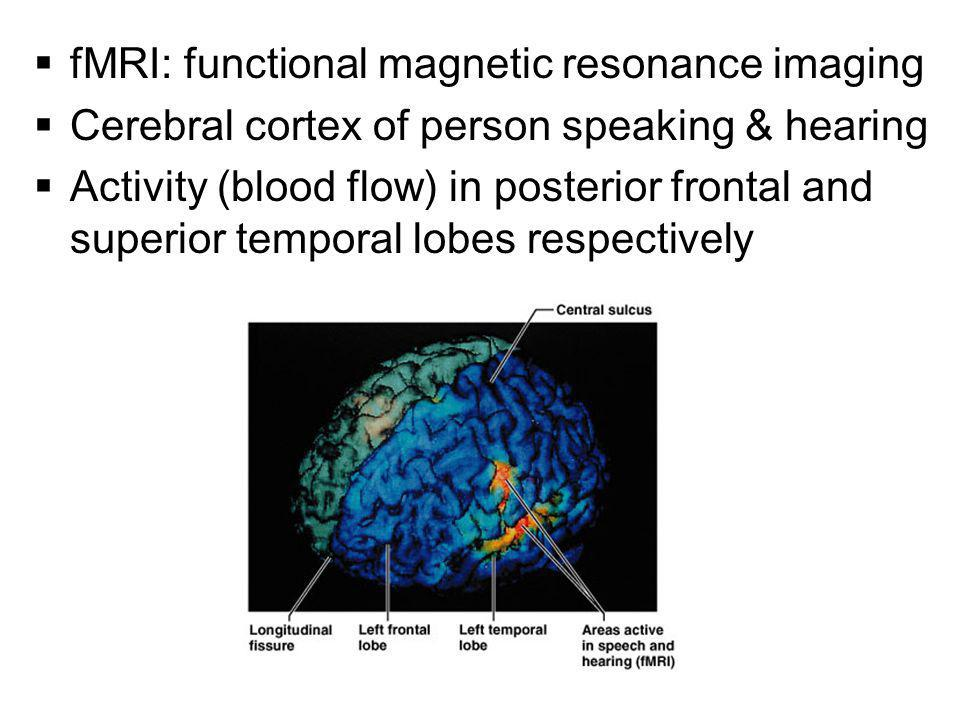  fMRI: functional magnetic resonance imaging  Cerebral cortex of person speaking & hearing  Activity (blood flow) in posterior frontal and superior