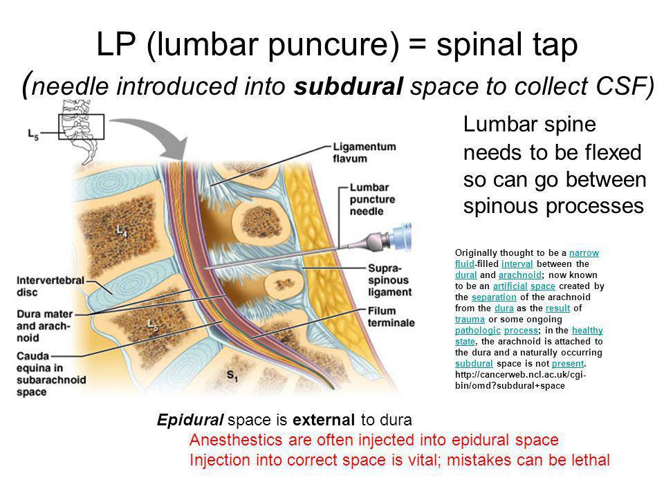 Internal capsule 1.Anterior limb of internal capsule 2.Genu of internal capsule 3.Posterior limb of internal capsule
