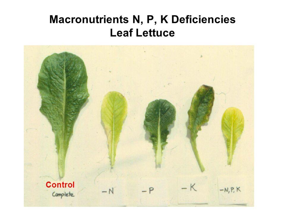 Macronutrients N, P, K Deficiencies Leaf Lettuce Control