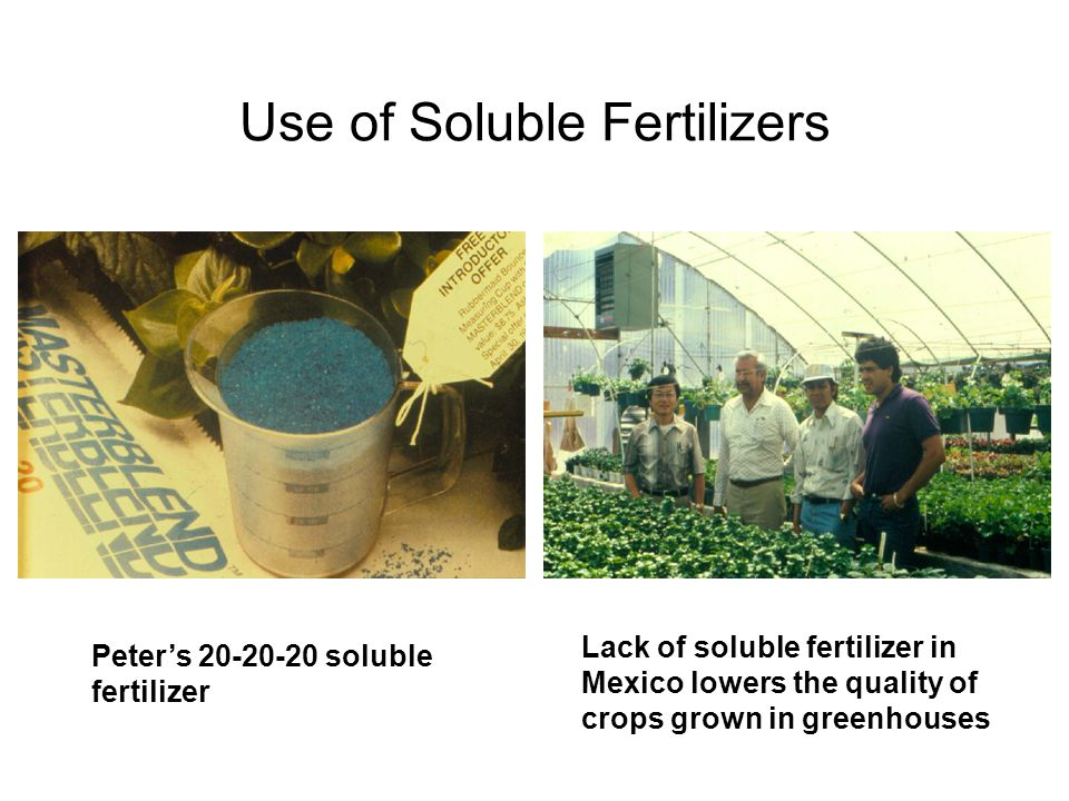 Use of Soluble Fertilizers Peter's 20-20-20 soluble fertilizer Lack of soluble fertilizer in Mexico lowers the quality of crops grown in greenhouses