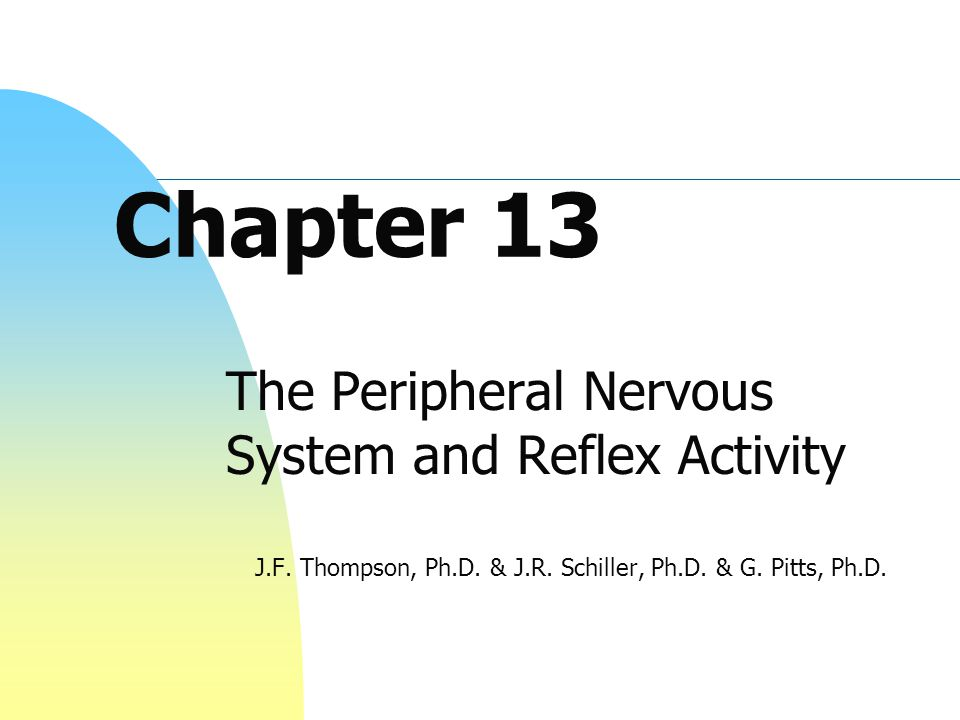 Chapter 13 The Peripheral Nervous System and Reflex Activity J.F. Thompson, Ph.D. & J.R. Schiller, Ph.D. & G. Pitts, Ph.D.
