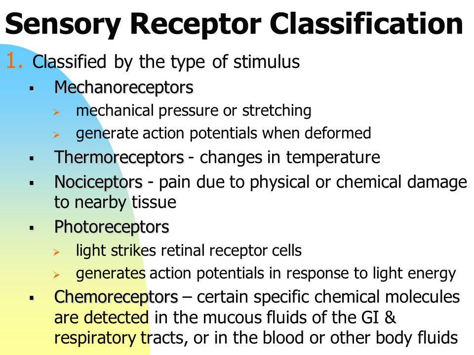 Sensory Receptor Classification 1.
