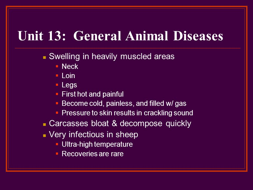 Unit 13: General Animal Diseases Swelling in heavily muscled areas  Neck  Loin  Legs  First hot and painful  Become cold, painless, and filled w/