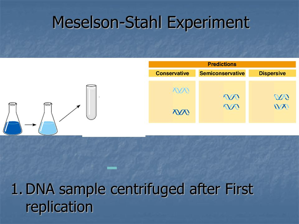 1.DNA sample centrifuged after First replication