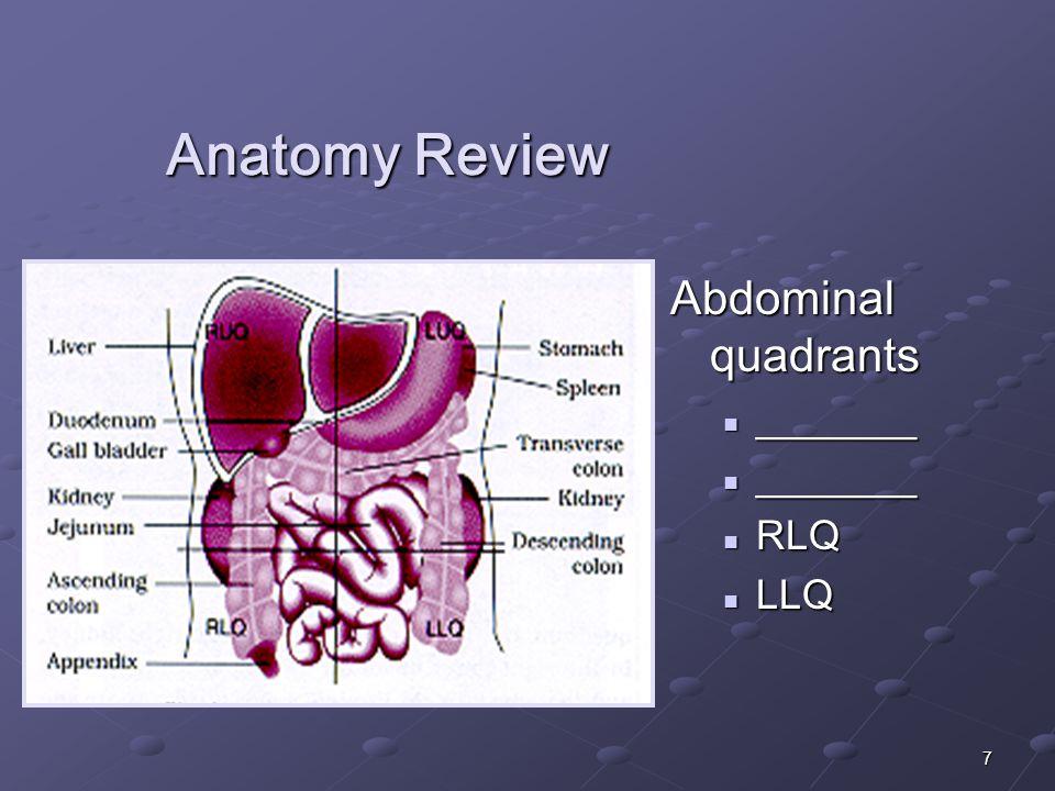 7 Anatomy Review Abdominal quadrants _______ RLQ LLQ