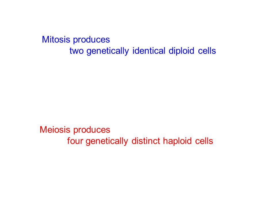 Mitosis produces two genetically identical diploid cells Meiosis produces four genetically distinct haploid cells