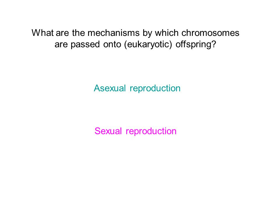 What are the mechanisms by which chromosomes are passed onto (eukaryotic) offspring.