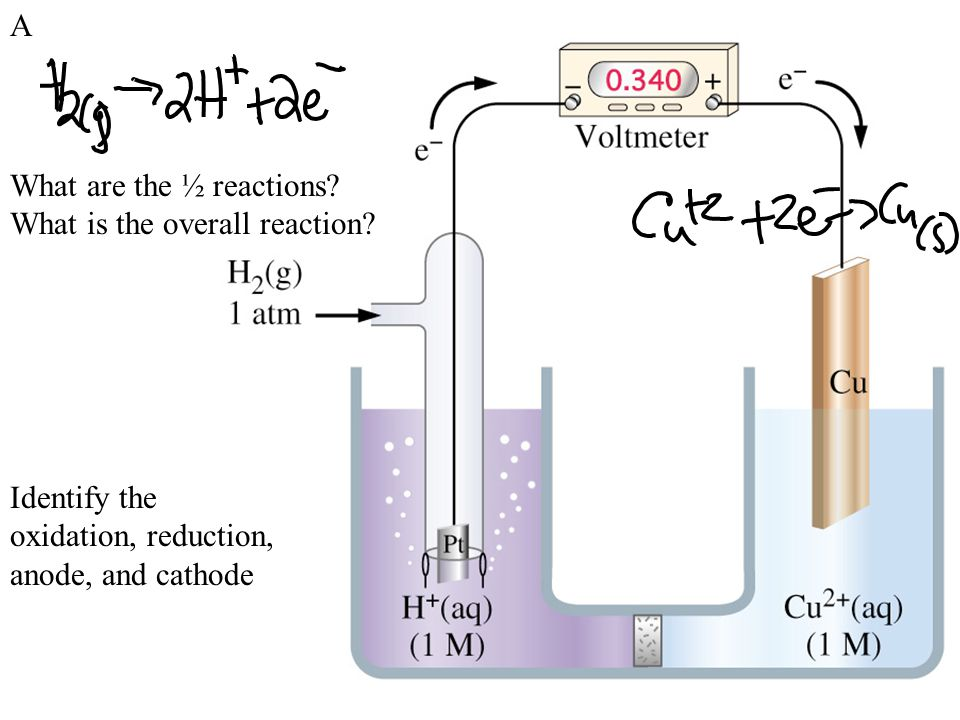 What are the ½ reactions.What is the overall reaction.