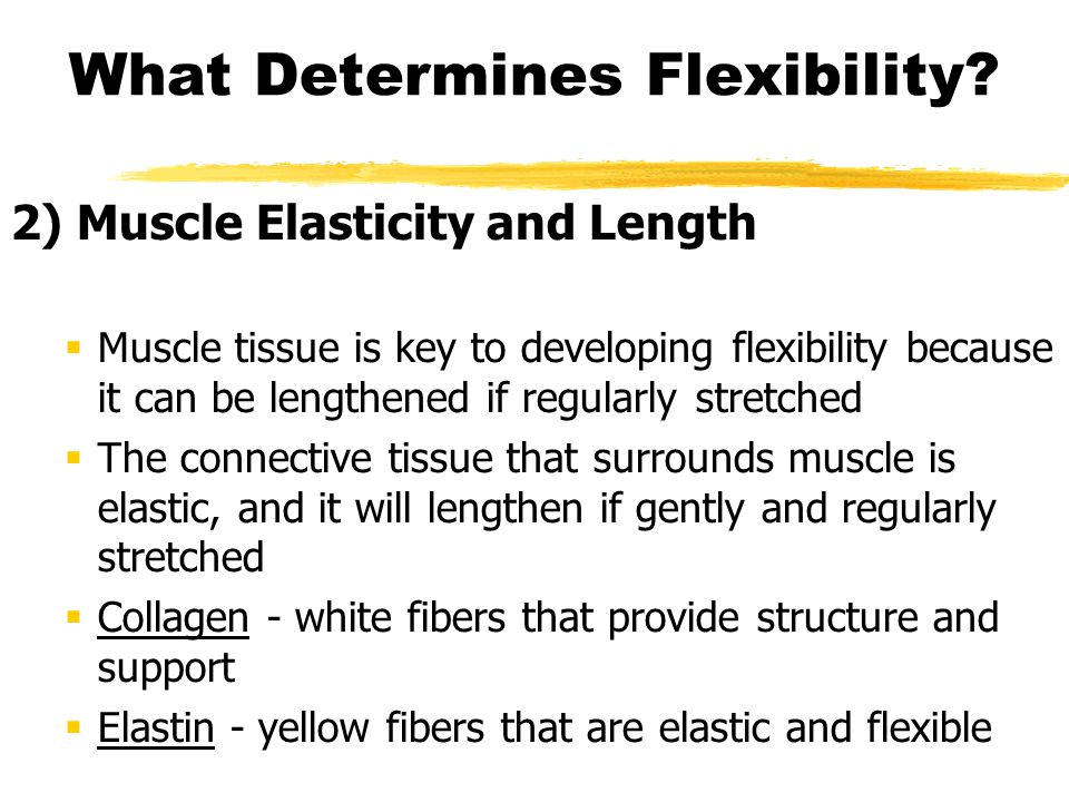 What Determines Flexibility? 2) Muscle Elasticity and Length  Muscle tissue is key to developing flexibility because it can be lengthened if regularl