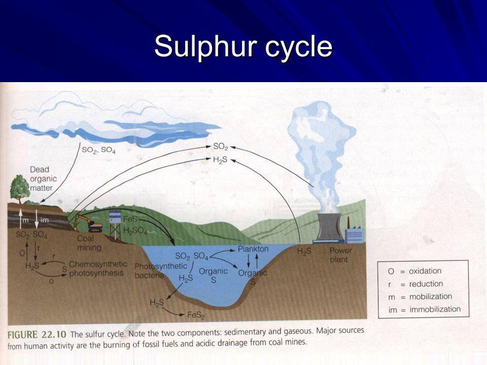 Sulphur cycle