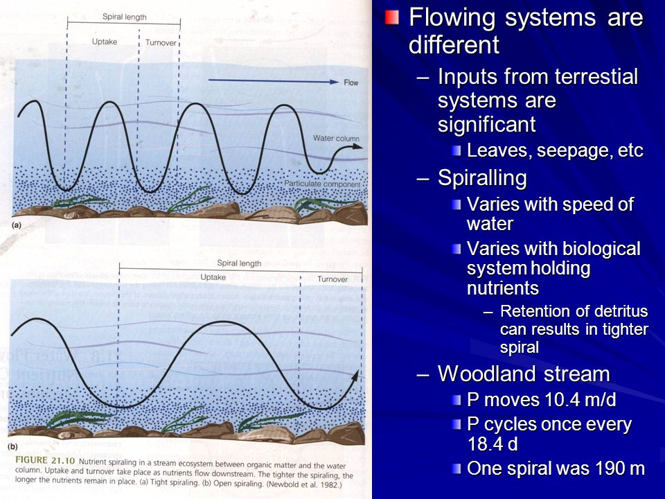 Flowing systems are different –Inputs from terrestial systems are significant Leaves, seepage, etc –Spiralling Varies with speed of water Varies with biological system holding nutrients –Retention of detritus can results in tighter spiral –Woodland stream P moves 10.4 m/d P cycles once every 18.4 d One spiral was 190 m
