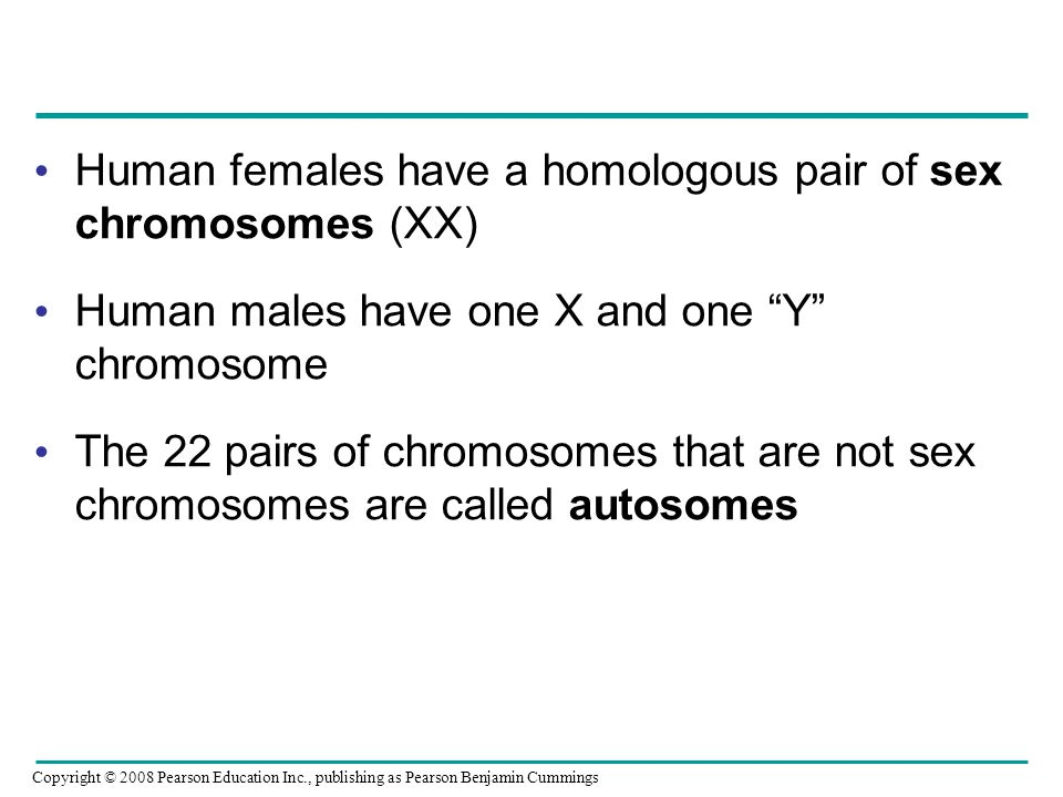 Human females have a homologous pair of sex chromosomes (XX) Human males have one X and one Y chromosome The 22 pairs of chromosomes that are not sex chromosomes are called autosomes Copyright © 2008 Pearson Education Inc., publishing as Pearson Benjamin Cummings