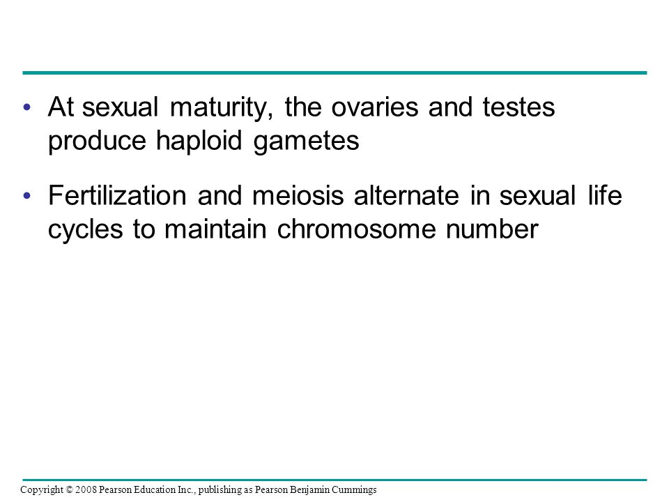 At sexual maturity, the ovaries and testes produce haploid gametes Fertilization and meiosis alternate in sexual life cycles to maintain chromosome number Copyright © 2008 Pearson Education Inc., publishing as Pearson Benjamin Cummings