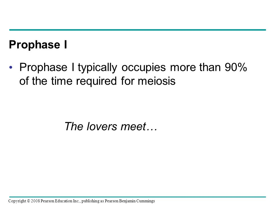Prophase I Prophase I typically occupies more than 90% of the time required for meiosis The lovers meet… Copyright © 2008 Pearson Education Inc., publ