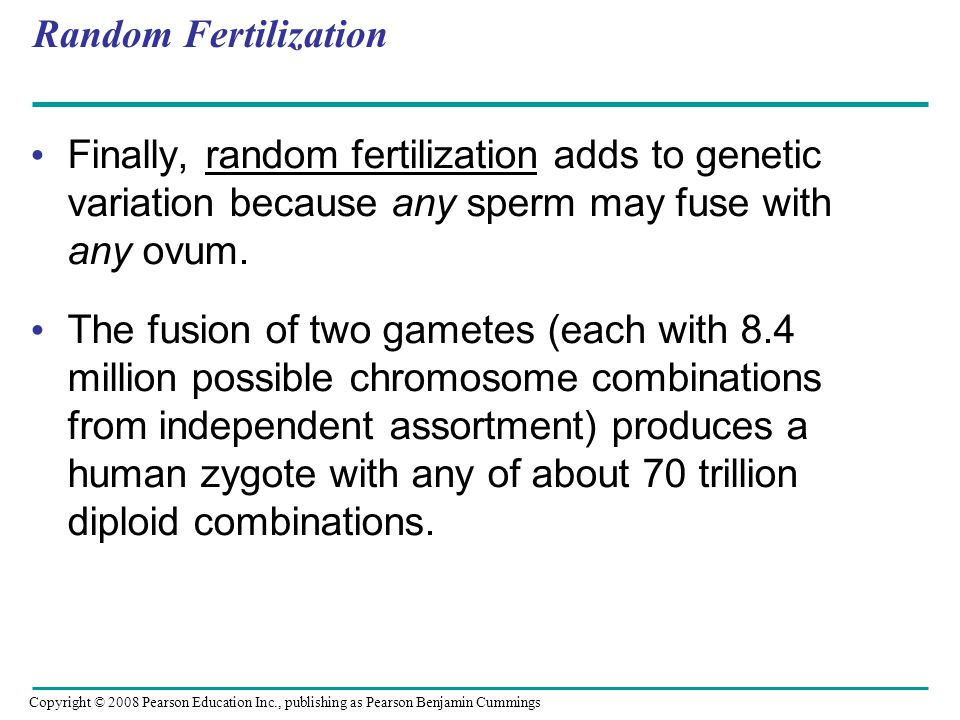 Random Fertilization Finally, random fertilization adds to genetic variation because any sperm may fuse with any ovum. The fusion of two gametes (each
