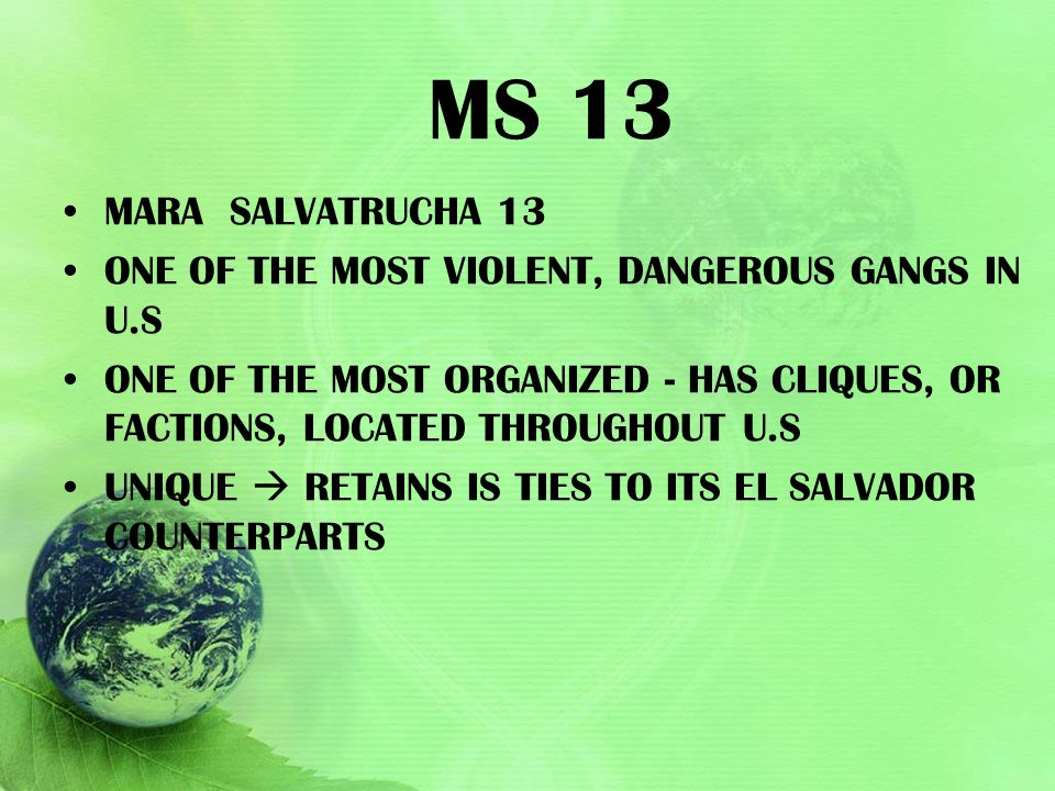 MS 13 MARA SALVATRUCHA 13 ONE OF THE MOST VIOLENT, DANGEROUS GANGS IN U.S ONE OF THE MOST ORGANIZED - HAS CLIQUES, OR FACTIONS, LOCATED THROUGHOUT U.S