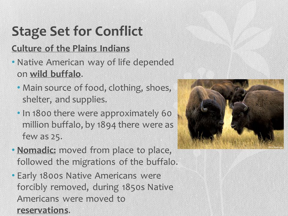 Stage Set for Conflict Culture of the Plains Indians Native American way of life depended on wild buffalo. Main source of food, clothing, shoes, shelt
