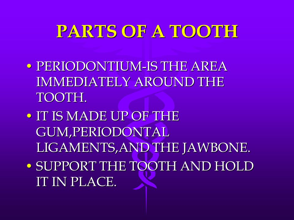PARTS OF A TOOTH PERIODONTIUM-IS THE AREA IMMEDIATELY AROUND THE TOOTH.PERIODONTIUM-IS THE AREA IMMEDIATELY AROUND THE TOOTH. IT IS MADE UP OF THE GUM
