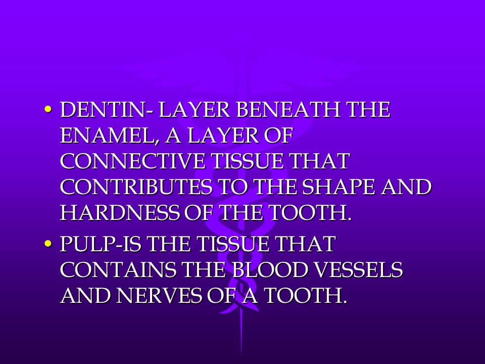 DENTIN- LAYER BENEATH THE ENAMEL, A LAYER OF CONNECTIVE TISSUE THAT CONTRIBUTES TO THE SHAPE AND HARDNESS OF THE TOOTH.DENTIN- LAYER BENEATH THE ENAME
