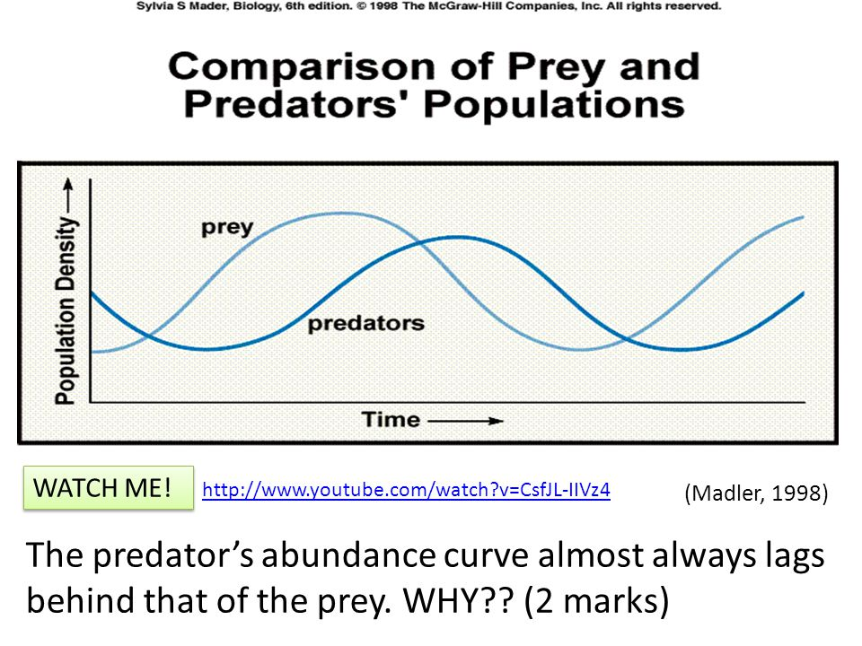 Predator – Prey Relationships: A Description The predator's abundance curve almost always lags behind that of the prey.