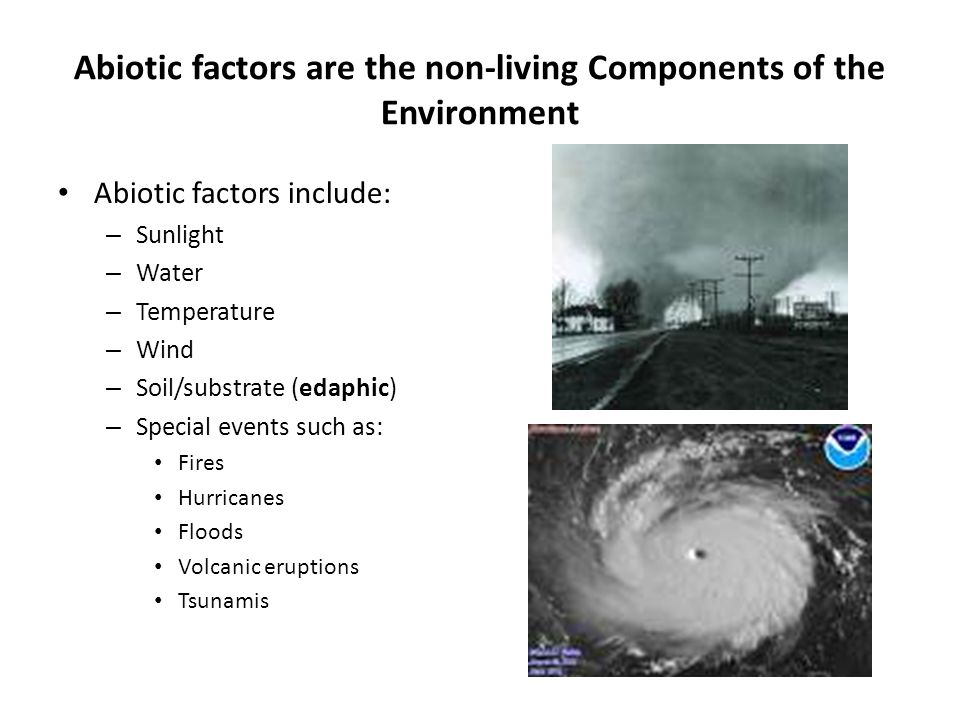 Abiotic factors are the non-living Components of the Environment Abiotic factors include: – Sunlight – Water – Temperature – Wind – Soil/substrate (edaphic) – Special events such as: Fires Hurricanes Floods Volcanic eruptions Tsunamis