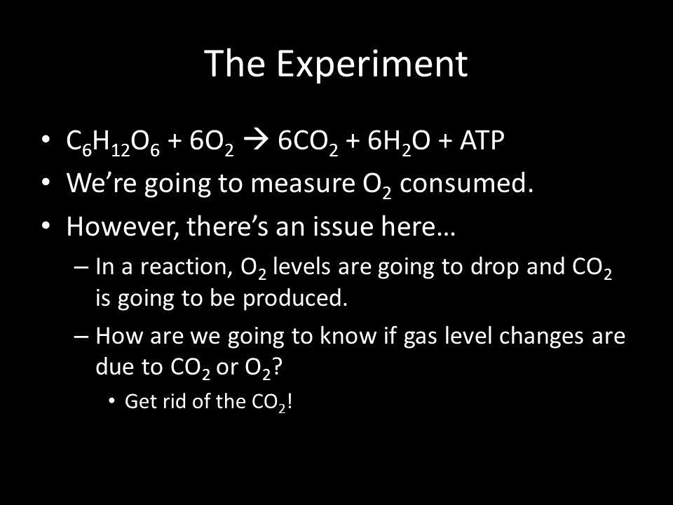The Experiment C 6 H 12 O 6 + 6O 2  6CO 2 + 6H 2 O + ATP We're going to measure O 2 consumed.
