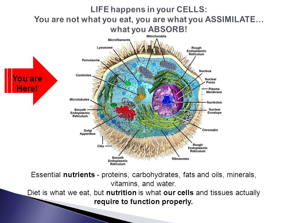 You are Here! Essential nutrients - proteins, carbohydrates, fats and oils, minerals, vitamins, and water. Diet is what we eat, but nutrition is what