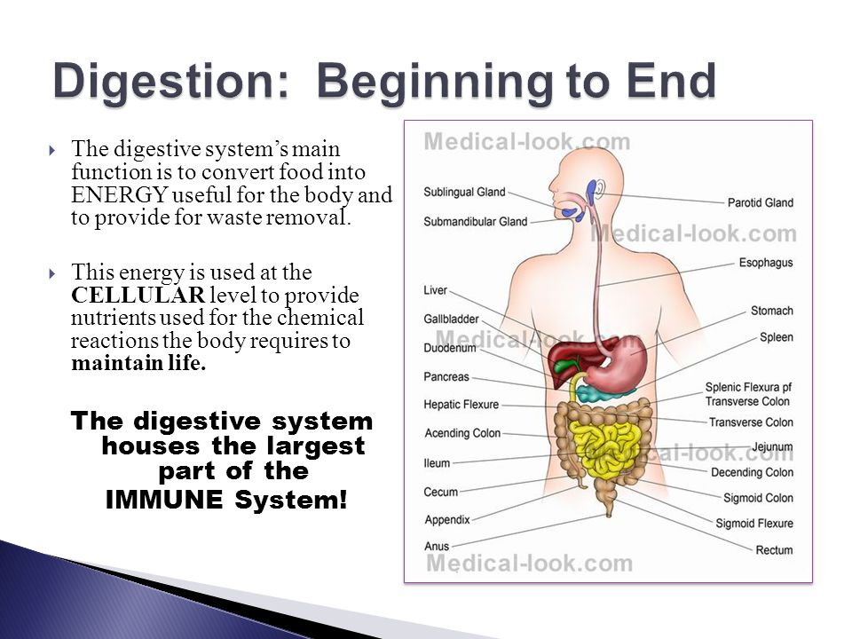  The digestive system's main function is to convert food into ENERGY useful for the body and to provide for waste removal.  This energy is used at t