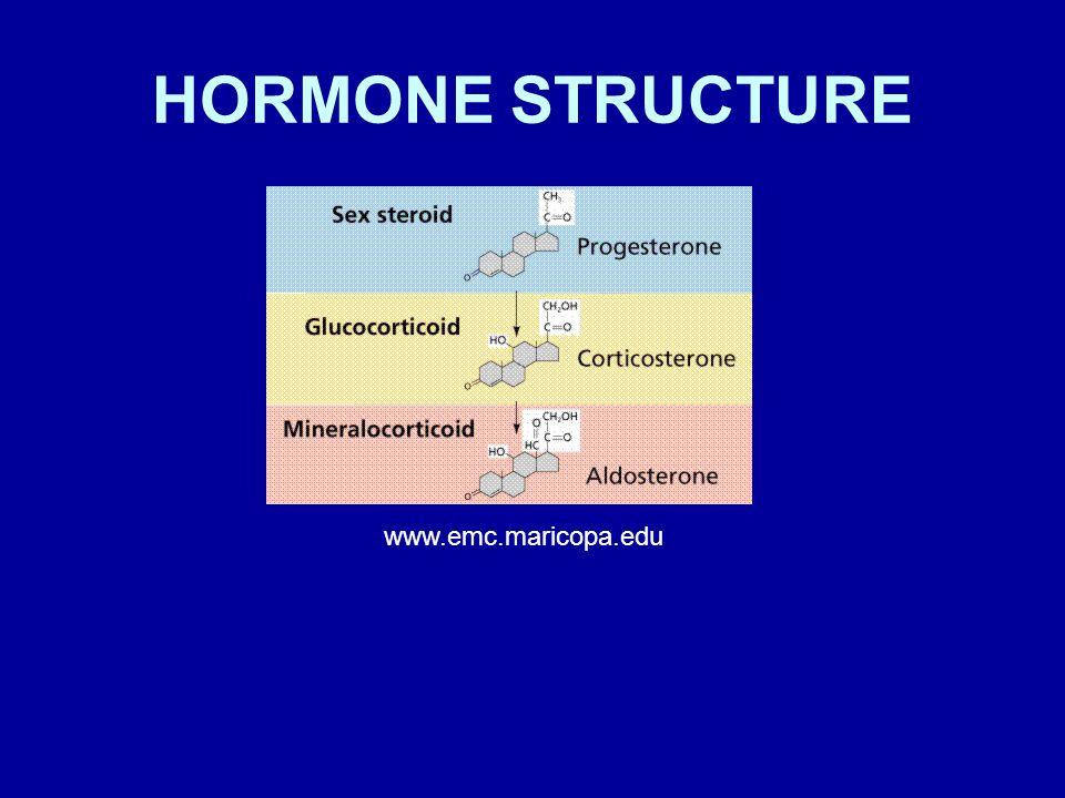 HORMONE STRUCTURE www.emc.maricopa.edu