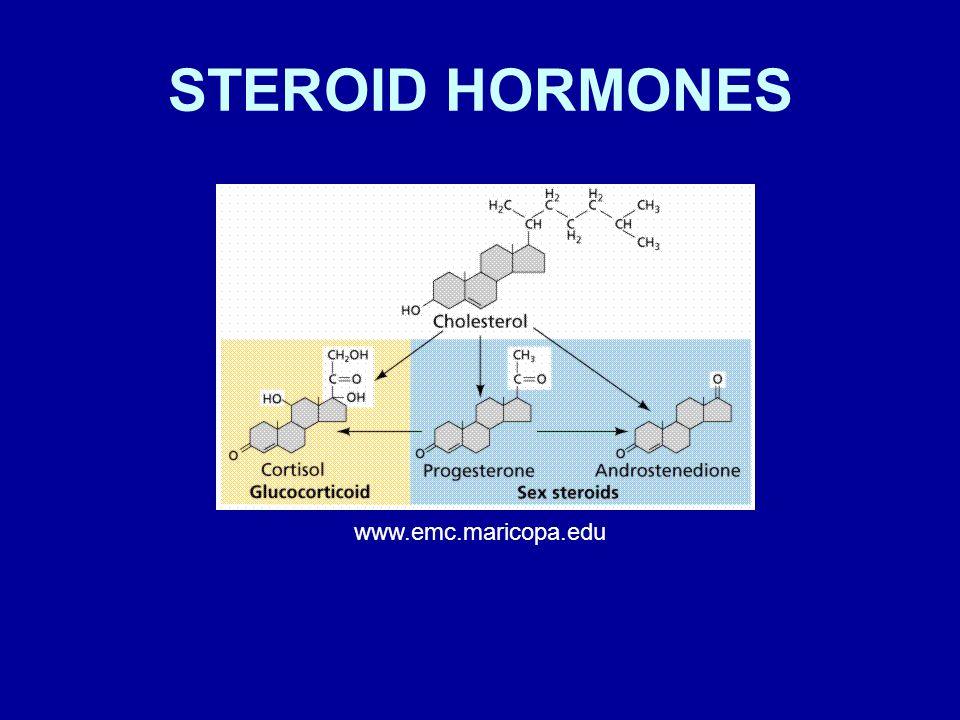 STEROID HORMONES www.emc.maricopa.edu