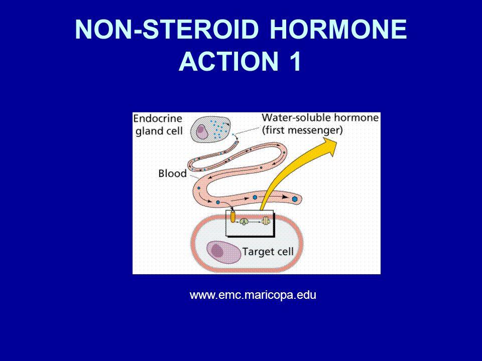 NON-STEROID HORMONE ACTION 1 www.emc.maricopa.edu