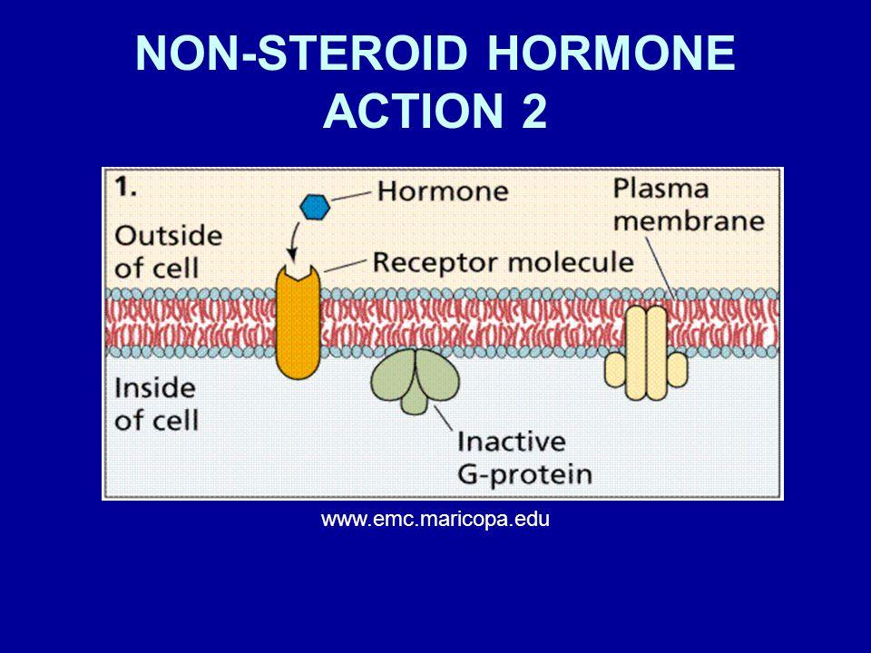 NON-STEROID HORMONE ACTION 2 www.emc.maricopa.edu