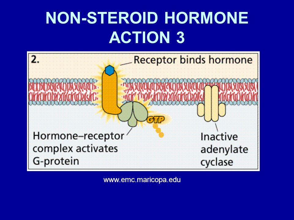NON-STEROID HORMONE ACTION 3 www.emc.maricopa.edu