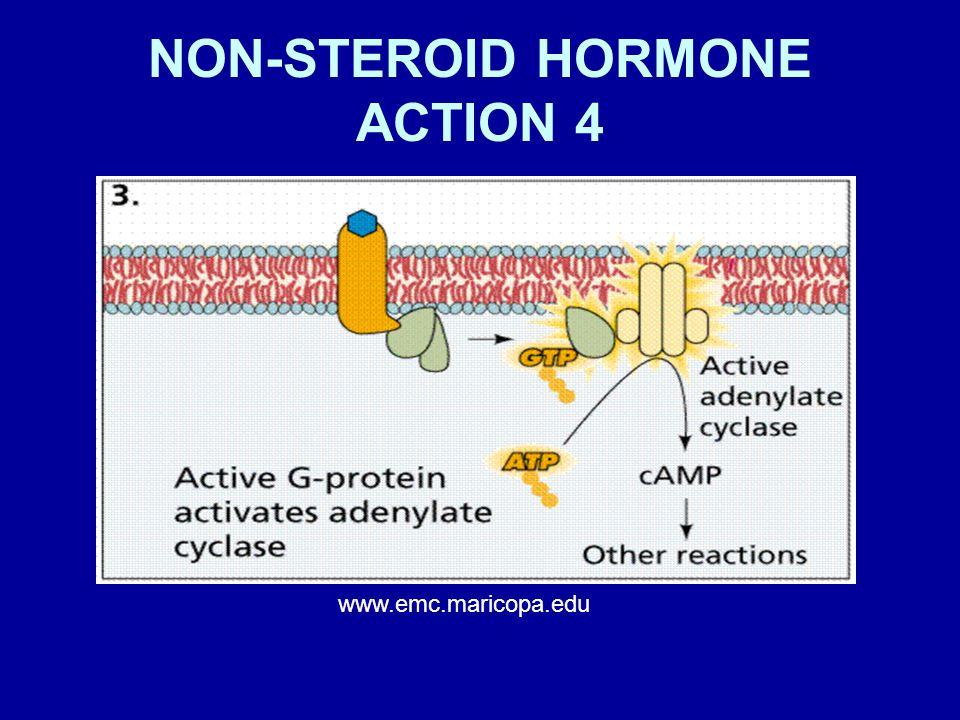 NON-STEROID HORMONE ACTION 4 www.emc.maricopa.edu