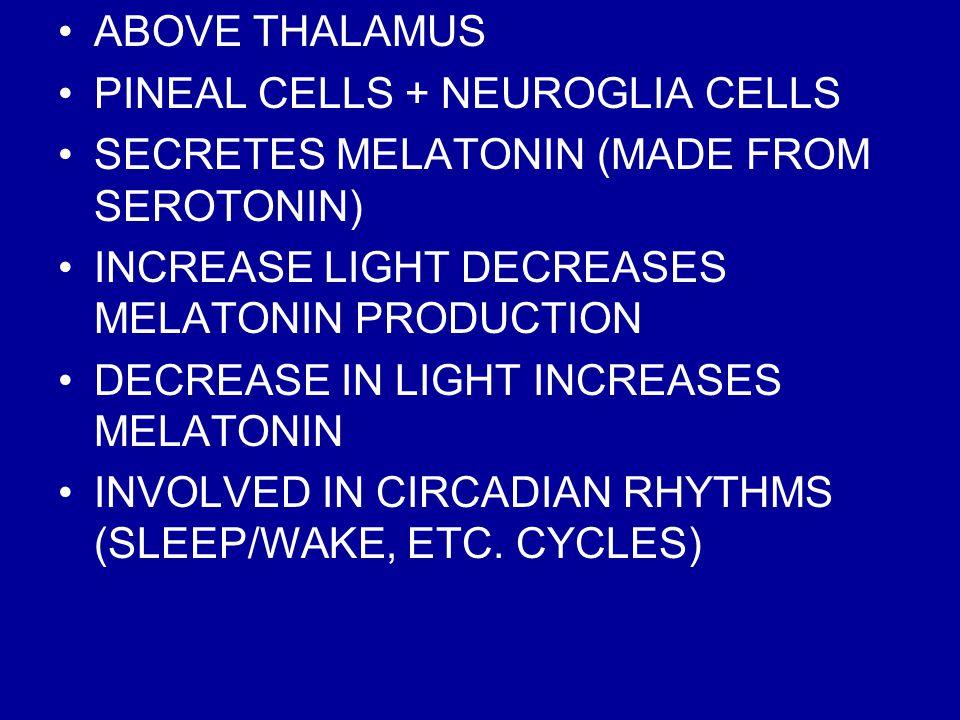 ABOVE THALAMUS PINEAL CELLS + NEUROGLIA CELLS SECRETES MELATONIN (MADE FROM SEROTONIN) INCREASE LIGHT DECREASES MELATONIN PRODUCTION DECREASE IN LIGHT INCREASES MELATONIN INVOLVED IN CIRCADIAN RHYTHMS (SLEEP/WAKE, ETC.