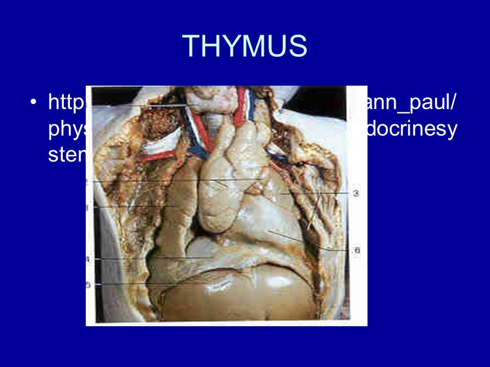 THYMUS http://homepage.smc.edu/wissmann_paul/ physnet/anatomynet/anatomy/endocrinesy stem.html