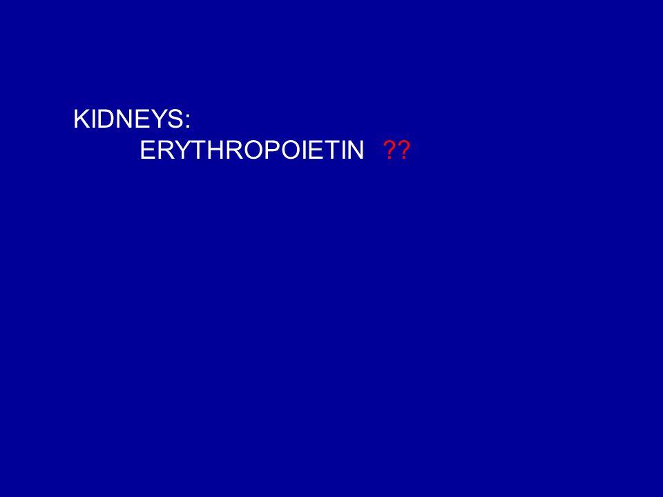 KIDNEYS: ERYTHROPOIETIN ??