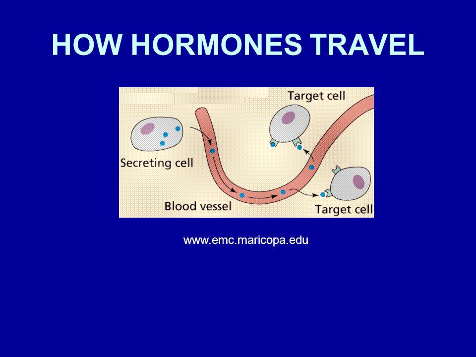 HOW HORMONES TRAVEL www.emc.maricopa.edu