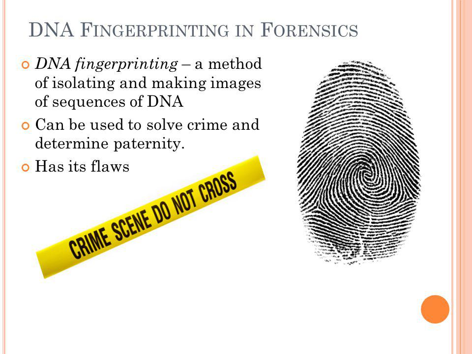 DNA F INGERPRINTING IN F ORENSICS DNA fingerprinting – a method of isolating and making images of sequences of DNA Can be used to solve crime and determine paternity.