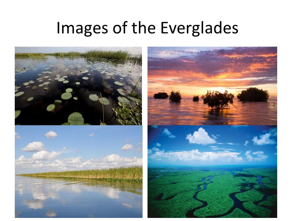 Images of the Everglades
