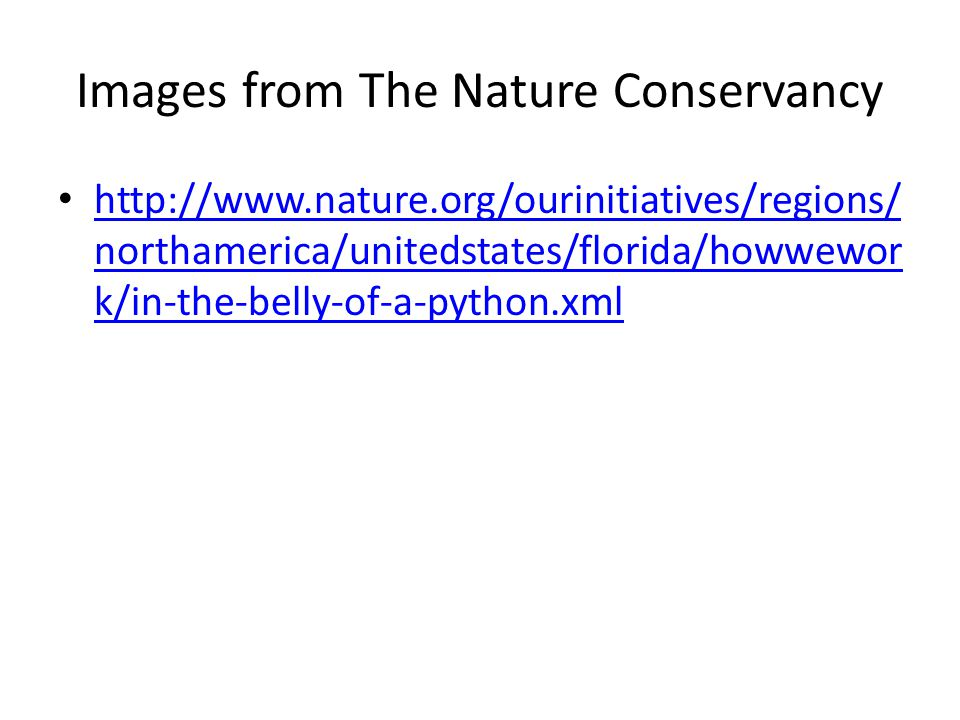 Images from The Nature Conservancy http://www.nature.org/ourinitiatives/regions/ northamerica/unitedstates/florida/howwewor k/in-the-belly-of-a-python