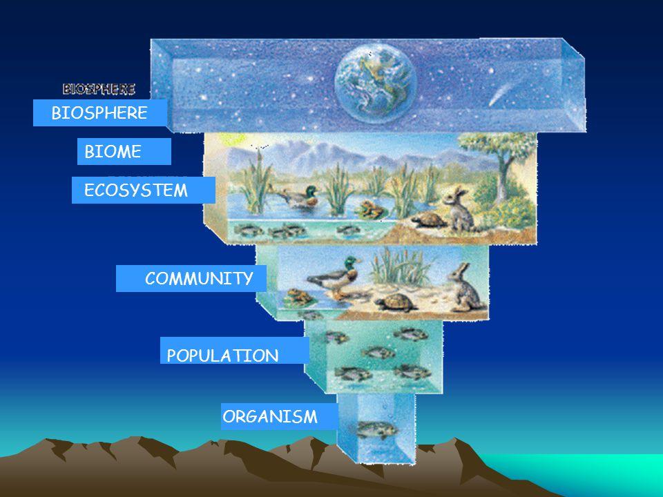 ORGANISM POPULATION COMMUNITY ECOSYSTEM BIOSPHERE BIOME