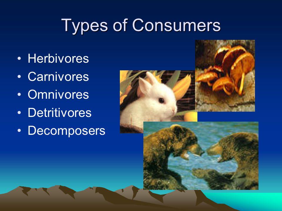 Types of Consumers Herbivores Carnivores Omnivores Detritivores Decomposers