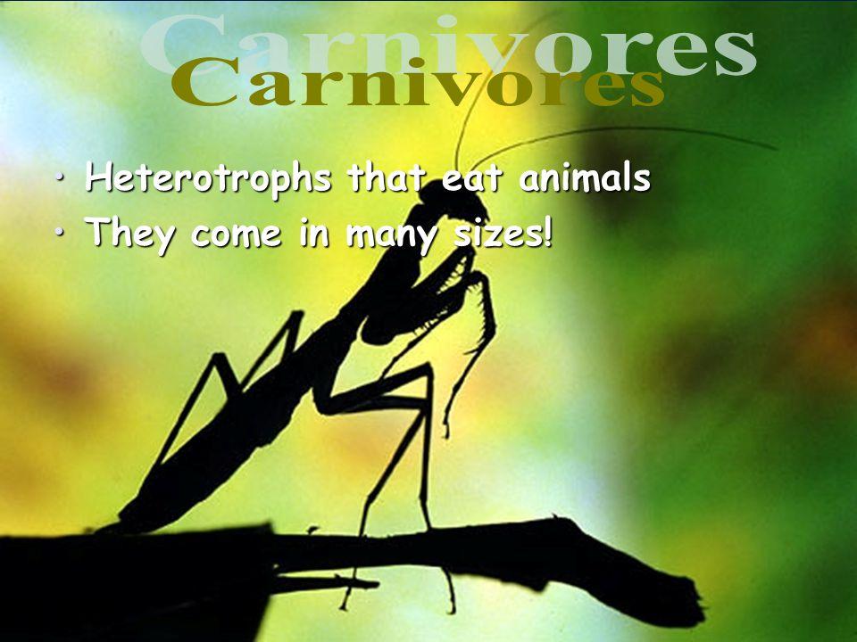 Heterotrophs that eat animalsHeterotrophs that eat animals They come in many sizes!They come in many sizes!