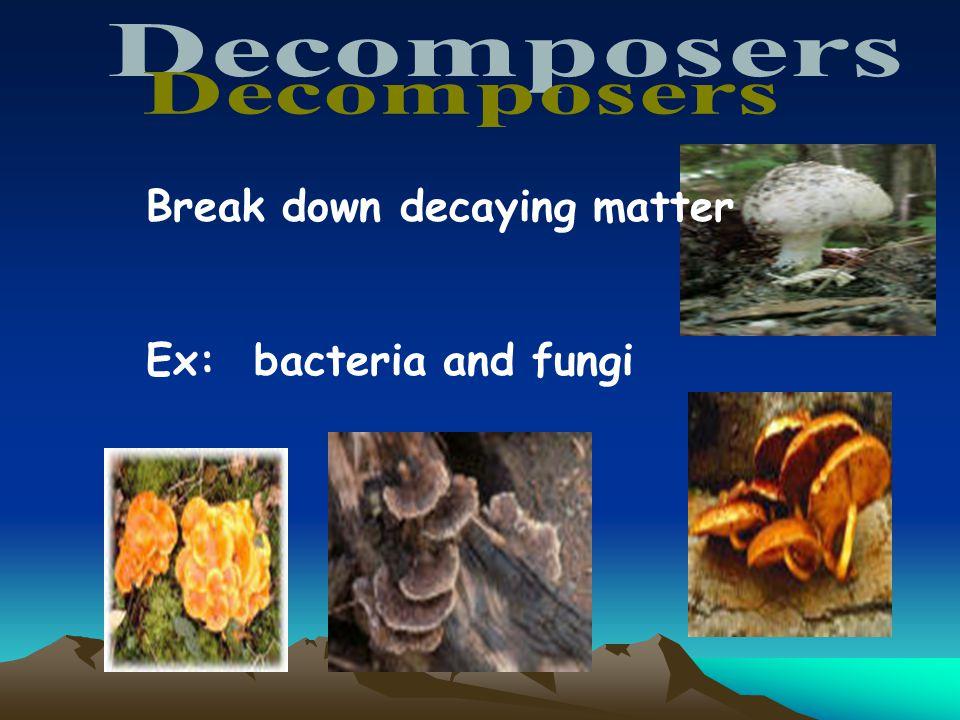 Break down decaying matter Ex: bacteria and fungi