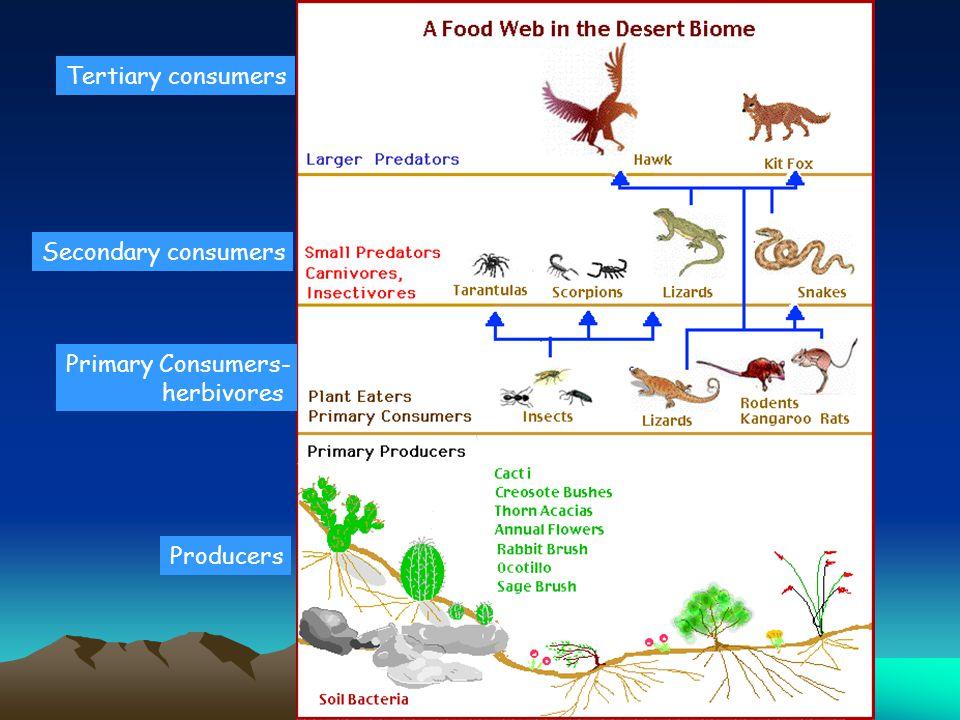 Producers Primary Consumers- herbivores Secondary consumers Tertiary consumers