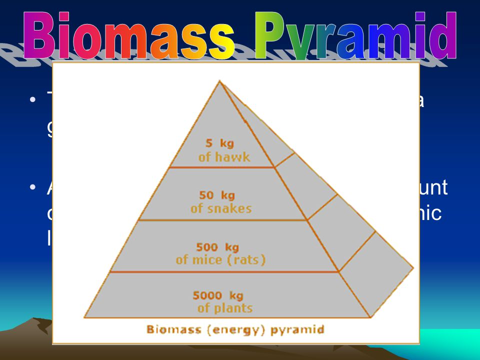 The total amount of living tissue within a given trophic level is called biomass. A biomass pyramid represents the amount of potential food available