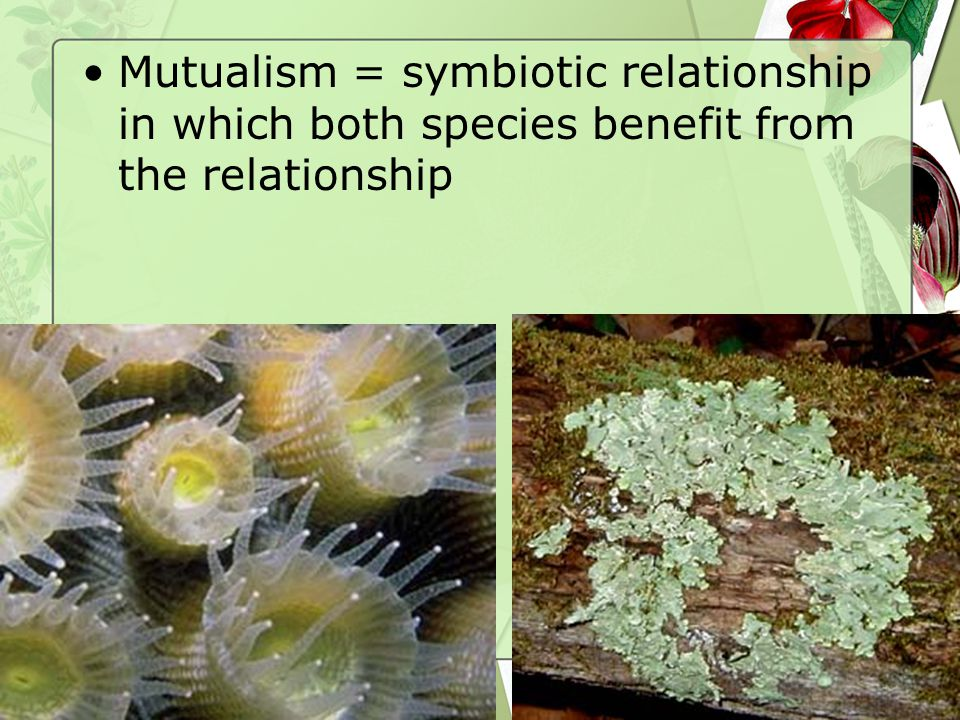 60 Mutualism = symbiotic relationship in which both species benefit from the relationship